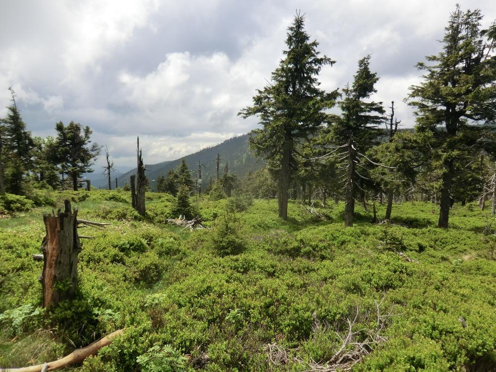 hory 4