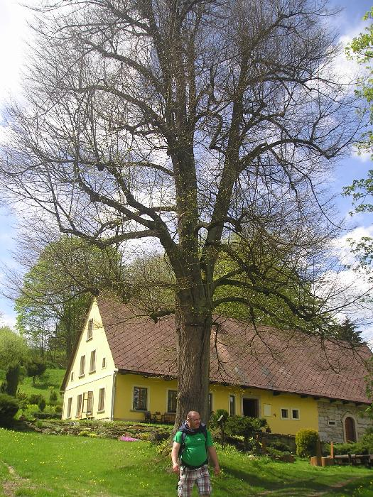 strom u marsovnm